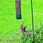 Opus 5151 Mangeoire à oiseau pliante anti-écureuils de la marque Opus image 3 produit