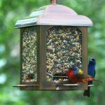 Opus Mangeoire à oiseaux Lanterne en cuivre ancien (900g) - 365 de la marque Opus image 4 produit
