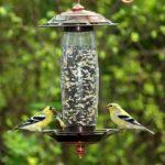 Opus Mangeoire à oiseaux pour graines ou eau - 737S de la marque Opus image 2 produit