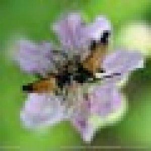 papillon pollinisateur TOP 0 image 0 produit