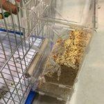 PAS DE saleté pour oiseaux Perroquet Mangeoire automatique intégrée avec perchoir Cage Accessoires pour perruche ondulée perruche calopsitte élégante Finch Canaries Graines de nourriture de la marque XMSSIT image 1 produit