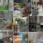 PAS DE saleté pour oiseaux Perroquet Mangeoire automatique intégrée avec perchoir Cage Accessoires pour perruche ondulée perruche calopsitte élégante Finch Canaries Graines de nourriture de la marque XMSSIT image 3 produit