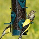 perchoir oiseaux jardin TOP 2 image 3 produit