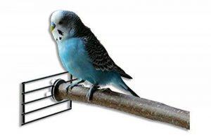 perchoir pour oiseaux en bois TOP 1 image 0 produit
