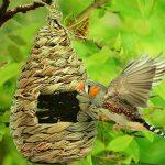 petite maison pour oiseaux TOP 13 image 1 produit