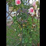 Pic pomme de la marque Jardins d'Hiver image 4 produit