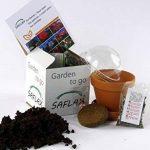 SAFLAX - Jardin dans la boîte - Fleur chauve-souris - 10 graines - Tacca chantrieri de la marque SAFLAX image 1 produit