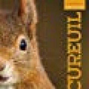 un ecureuil TOP 1 image 0 produit