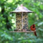 un mangeoire pour oiseaux TOP 5 image 3 produit