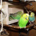 Vogelgaleria Niche à oiseau en bois avec avancées perchoirs Pour cage à oiseau ou volière de la marque Vogelgaleria image 1 produit