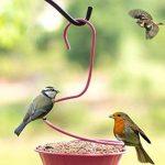 wandlee simple à suspendre Humming canari Parrot Pigeon Sauvage Mangeoire pour oiseaux de la marque WandLee image 1 produit