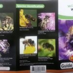 Wildlife World Coffret Biome Abeilles et Insectes avec Guide et Sachet Graines de la marque Wildlife World image 2 produit