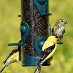 Woodstream 3261 Mangeoire à Oiseaux et Pinsons Finch Feeder™ de Perky-Pet® de la marque Opus image 3 produit